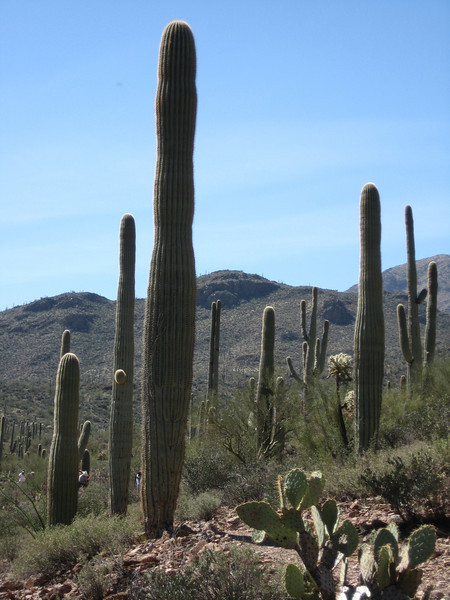 3.2.09 - Saguaro National Park