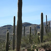 3.2.09 - Saguaro National Park