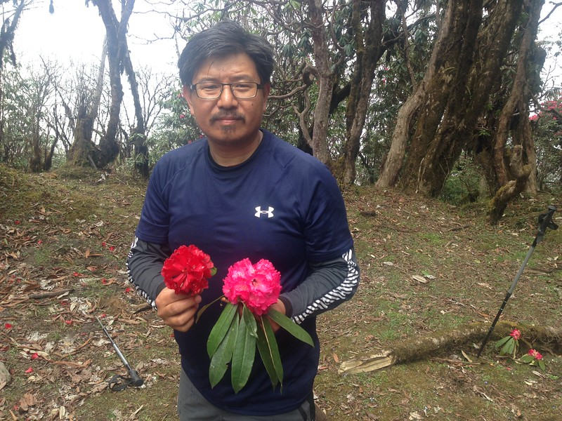 With Rhododendrons