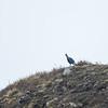Danfe Bird
