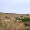 Dag5 El Kelaa des M`Gouna- Vallee du Roses- Dades Gorge-Msemrir-Boumalne Dades