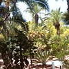 Jardin Majorelle (S)22