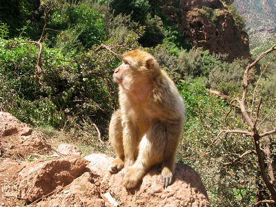 Monkey at the falls.