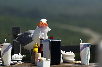 Martha's Vineyard Saturday, July 17, 2004. ( Damon Dahlen / The Washington Times ) http://www.washingtontimes.com/ (Damon Dahlen/Washington Times)