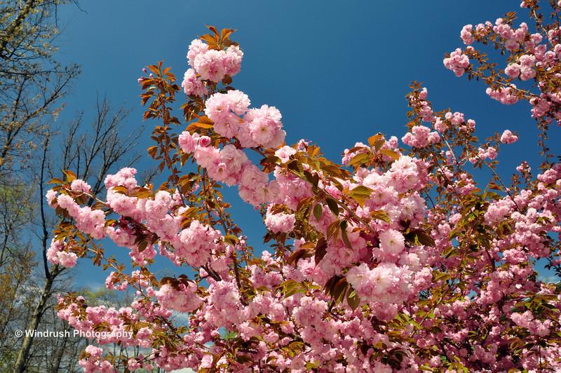 001 Blossom, Hickory Ridge, Maryland