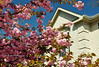 003 Blossom, Hickory Ridge, Maryland