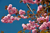 005 Blossom, Hickory Ridge, Maryland