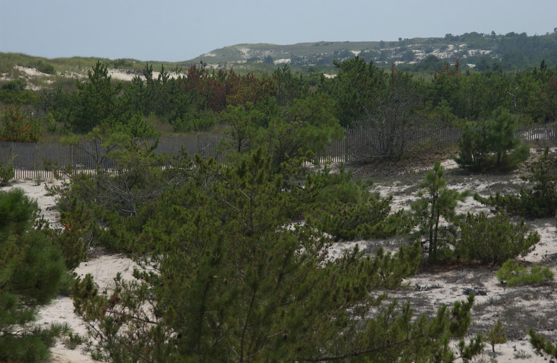 Cape Henlopen, looking S. from beach ramp