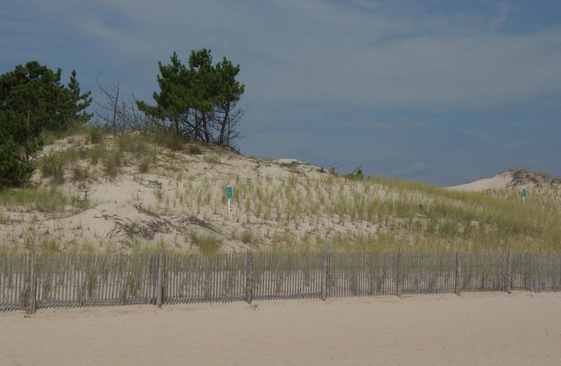 Dunes near Herring Point Beach at Cape Henlopen