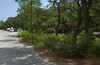 Lane through Cape Henlopen campground, DE
