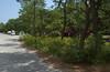 Lane through Cape Henlopen campground, DE