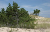 Dunes near Herring Point Beach at Cape Henlopen