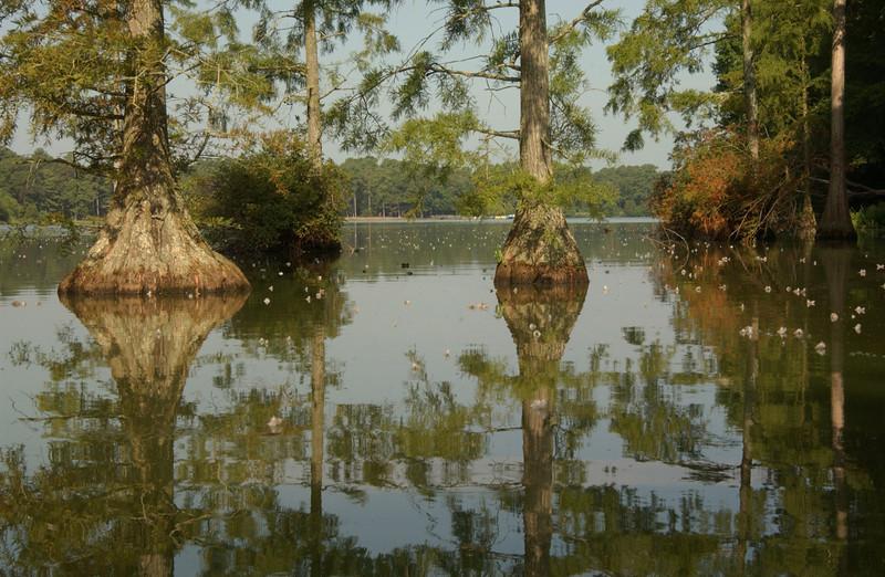 View of Trap Pond, DE