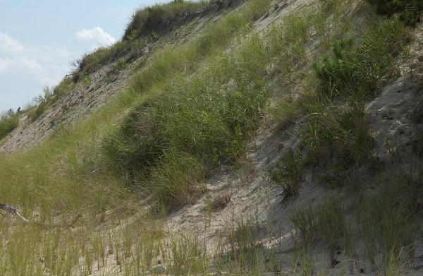 Dunes at Herring Point