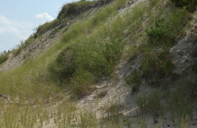 Dunes at Herring Point