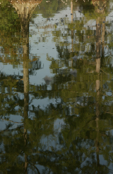 Bald Cypress Reflections