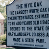 Signage - Oldest White Oak in USA - Wye Mills, MD  5-11-01