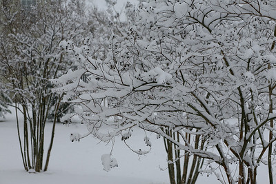 Winter Snow at Cattail