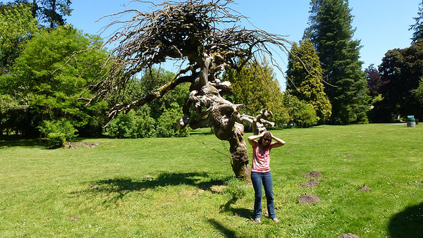 This reminded us of the Whomping Willow tree in the Harry Potter series.