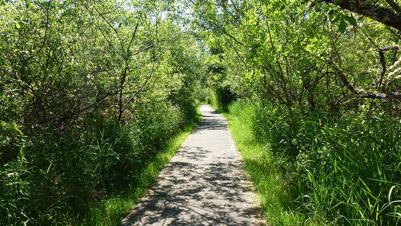 The park trail