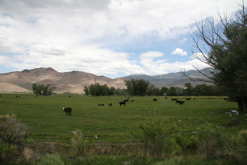 The Sevier River and route 89 run parallel for many miles.  Driving along you can see the lush green fields in stark contrast to the mountains behind.  Horses, cattle and sheep are common grazing animals often seen in fields.