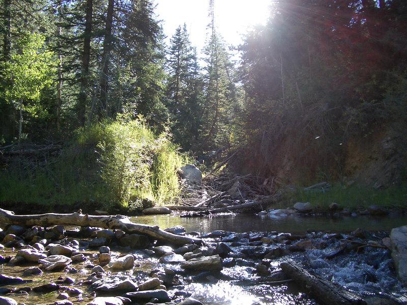 Deer creek trail #74