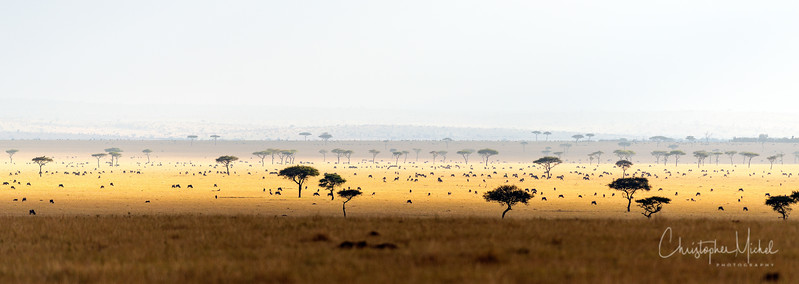 The Plains of Africa
