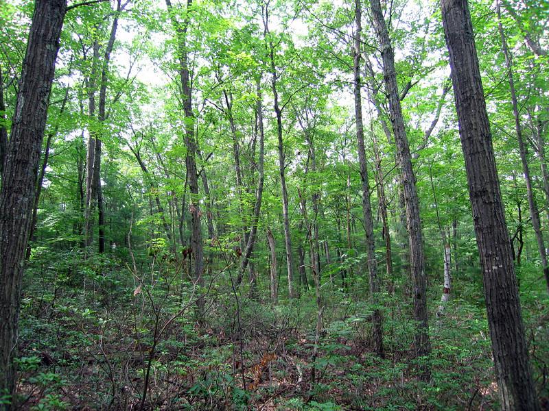 Leominster State Forest, Massachusetts, 7 Aug 2007