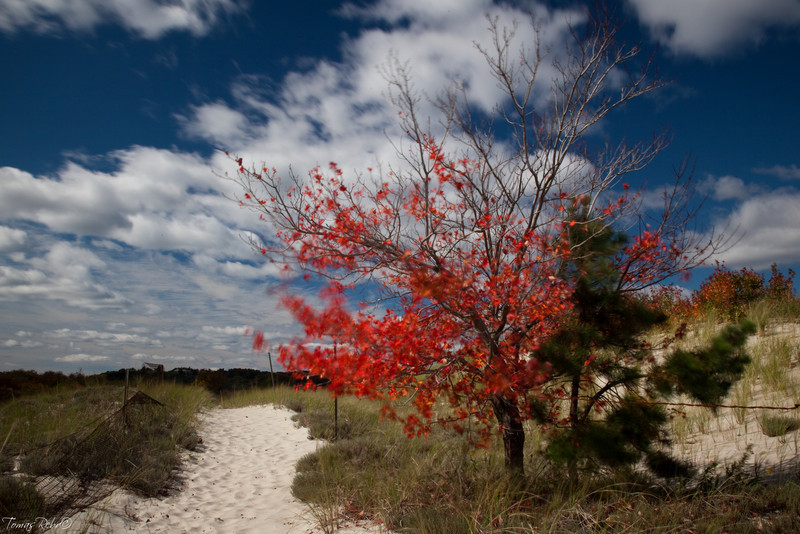 Crane beach, Massachusetts, USA