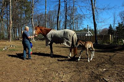 Tara, Gurtie, and her Foal, Linus