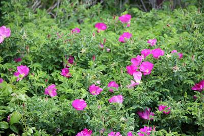 Flowers Near Ipswich Bay Yacht Club
