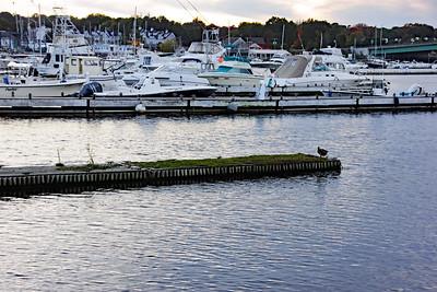 Mallard Dock - View from Ring's Island