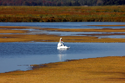 Parker River National Wildlife Refuge / September 19, 2014