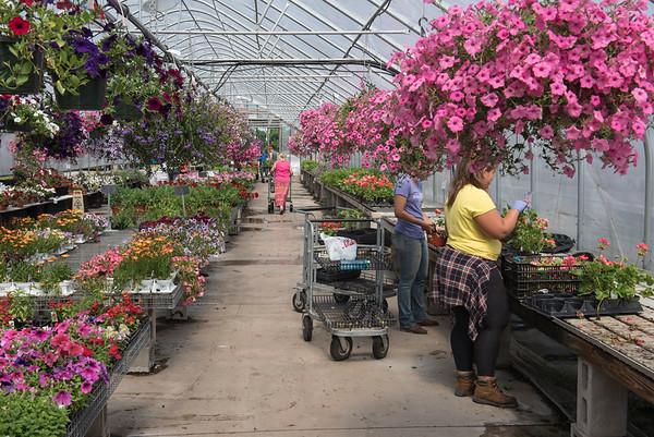 Pleasant Valley Gardens & CSA - Methuen