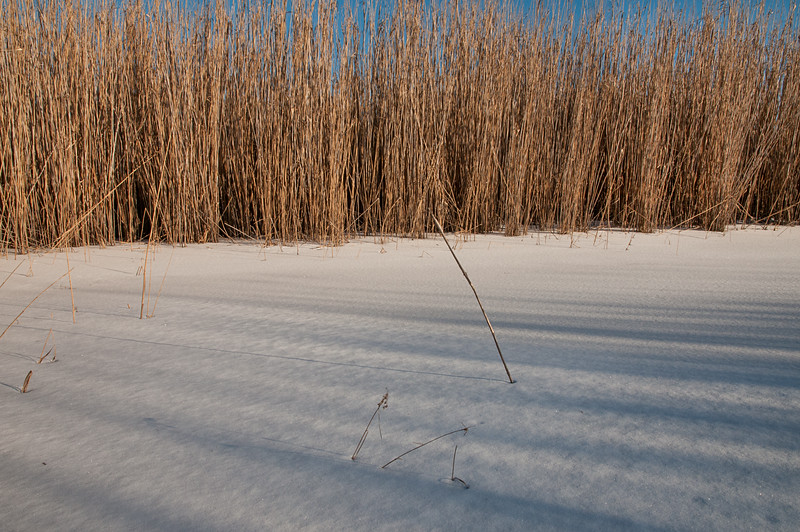 17-Jan-2015<br /> 3:12pm<br /> My first time in the river meadows this winter.  The conditions are great. Well Frozen, Wind swept after a moderate snowfall (before all the crazy snowfall of winter 2015), and nice golden flora.
