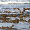 Pelican Backwash low tide