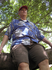 Dale sitting on a huge Banyan tree.