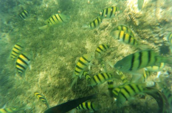 Maui 2005