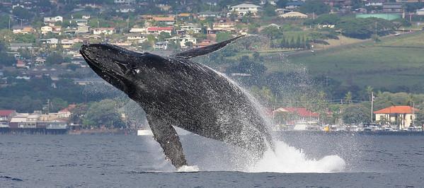 Maui 2009