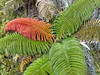 Multi color fern on Haleakala