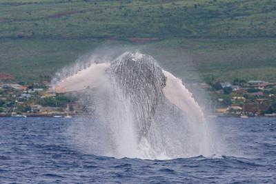 Maui 2014