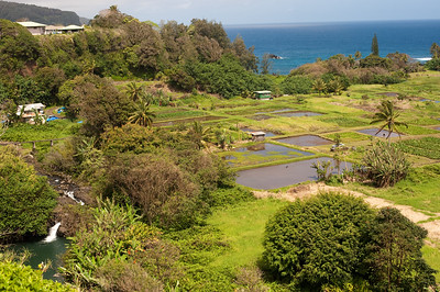 View of taro fields, on the roaed to Hana