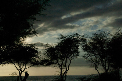 Cloudy Sea, Evening Trees