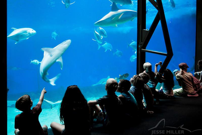 Shark Tank: Maui Ocean Center, Maui, Hawaii - March 2013
