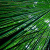 Bamboo Forest: Haleakala National Park, Maui, Hawaii - March 2013