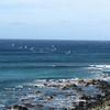 Surfers and windsurfers.