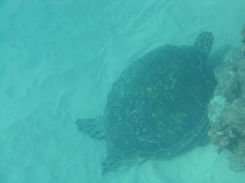Our turtle friend down on the sandy bottom.