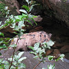 Looks like a rock, but this was a dead pig in the creek below the waterfall.