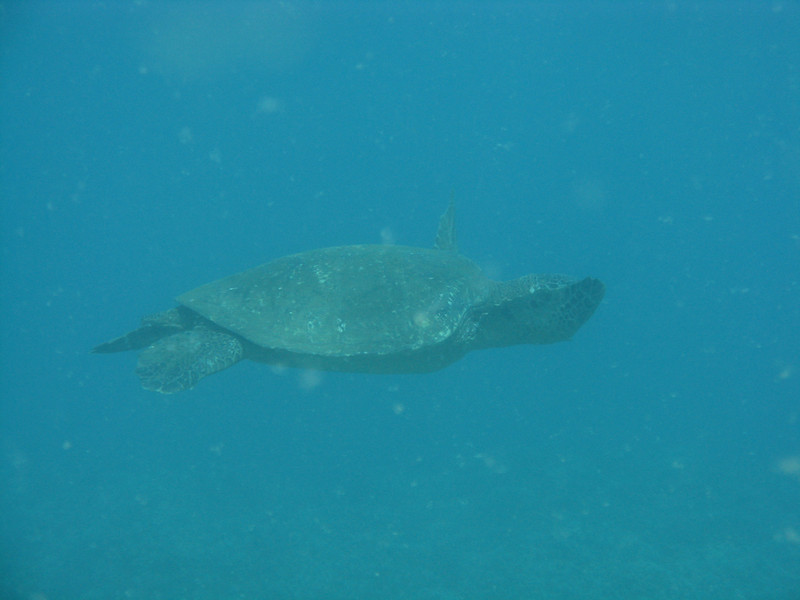 Sea Turtles were everywhere at this dive site.