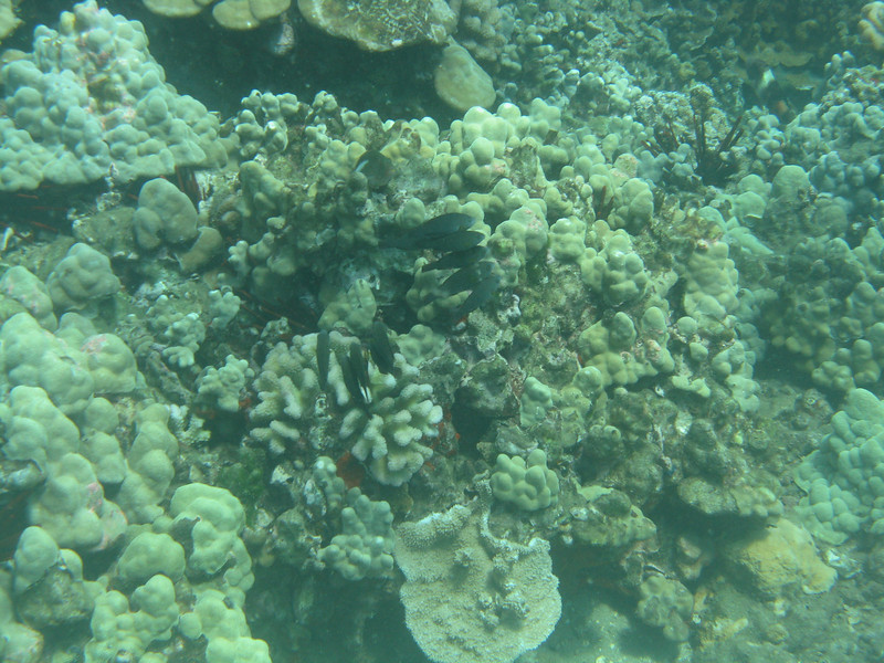 Another cluster of fish in coral.